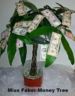Miss Faber-Money Tree v