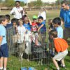 kiindergarten students gather around live turkeys inside fencing
