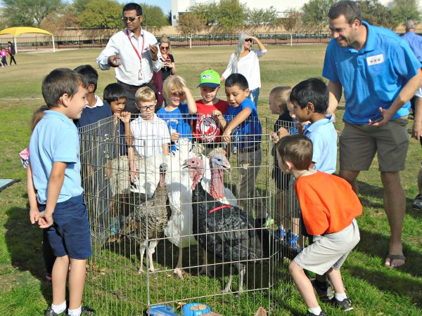 kiindergarten students gather around live turkeys inside fencing